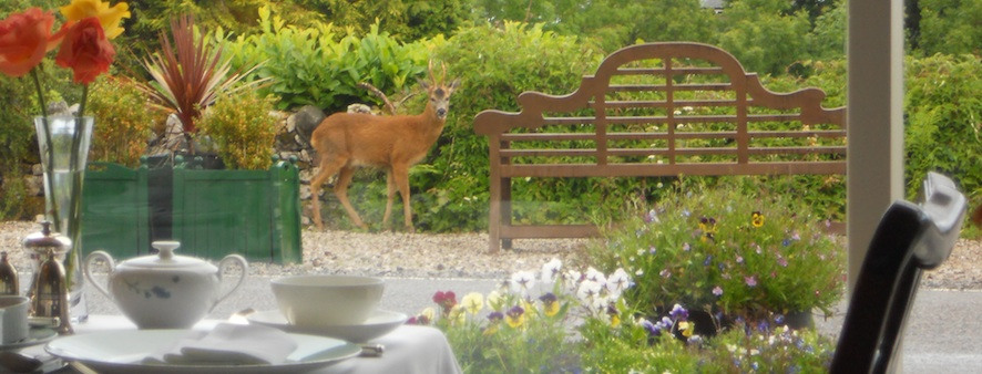 deer_at_breakfast_header_2.jpg